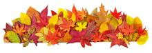 Herbst Laub - Panorama