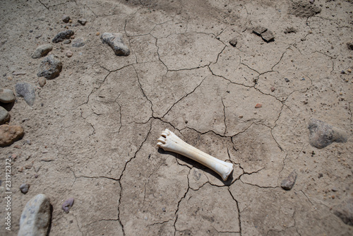 4710d8e39502 dry bone on dry lake bed - Buy this stock photo and explore similar ...