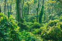 Subtropical Dense Forest Of Nepal, Dense Jungle Background