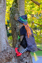 Halloween Decoration Witch Crashing Into A Tree.