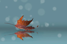 Dry Autumn Maple Leaf With Reflection In The Water In Cold Blue Tone.