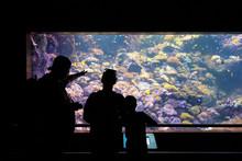 Family Inside The Aquarium / Zoo