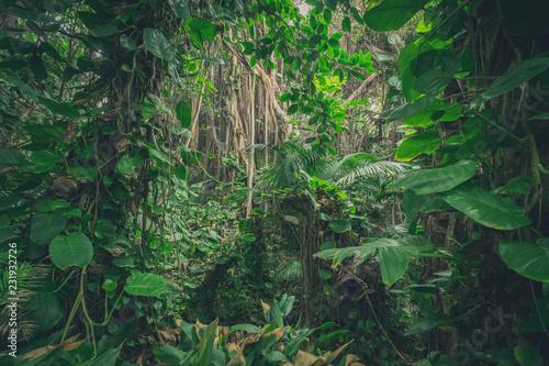 Naklejka premium w dżungli, w lesie deszczowym / tropikalnym lesie
