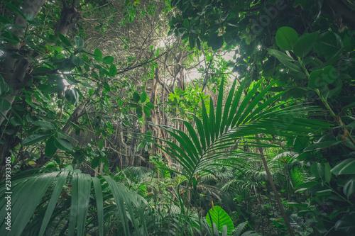 Photo jungle , in rainforest / tropical forest landscape