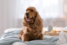 Cute Cocker Spaniel Dog With W...