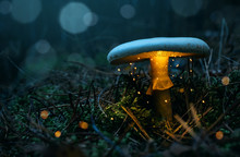 Fairy, Glowing Mushroom In The...