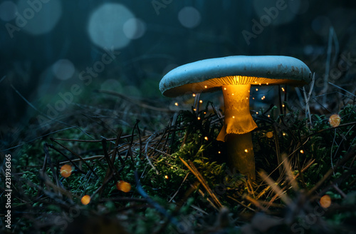 Canvas Print Fairy, glowing mushroom in the misty forest at night with copy space