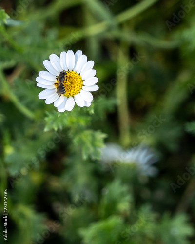 Foto op Canvas Bloemen little white flower