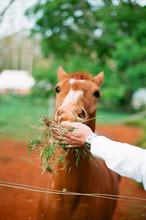 Caramel Horse