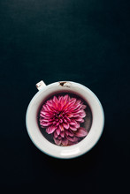 Dahlia Floating In A Vintage Cup