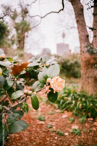 Foto op Canvas Tuin Flowers at Botanical Garden