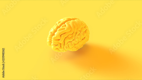 canvas print motiv - paul : Yellow Human brain Anatomical Model 3d illustration 3d rendering