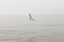 A Sea Gull Gliding Over A Body Of Water