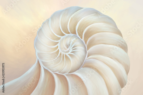 Fototapeta  Nautilus shell cross section spiral Fibonacci