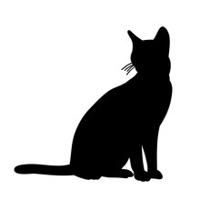 Isolated, Black Silhouette Cat Sitting