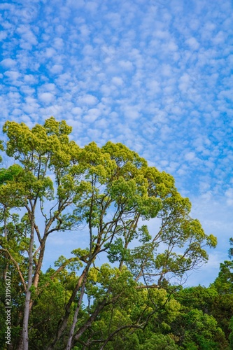 Spoed Foto op Canvas Bomen Beautiful tree at green grass field