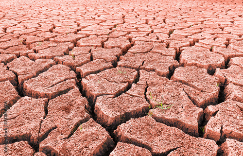 Red arid desert with sprouting grass and cracks. Close-up of split dry land with surviving green growth. Abstract texture of drought. Barren landscape. Hope concept. Idea of extreme weather, ecology.