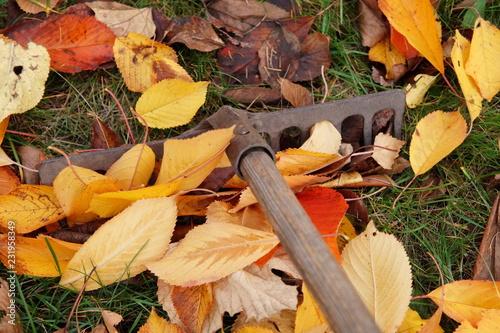 jesienne porządki grabienie liści