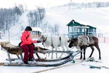 Girl Riding Reindeer Sleigh In...