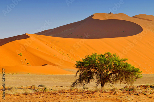 Fotografie, Obraz  Sossusvlei landscape with Acacia trees and red sand dunes, Namibia, southern Africa