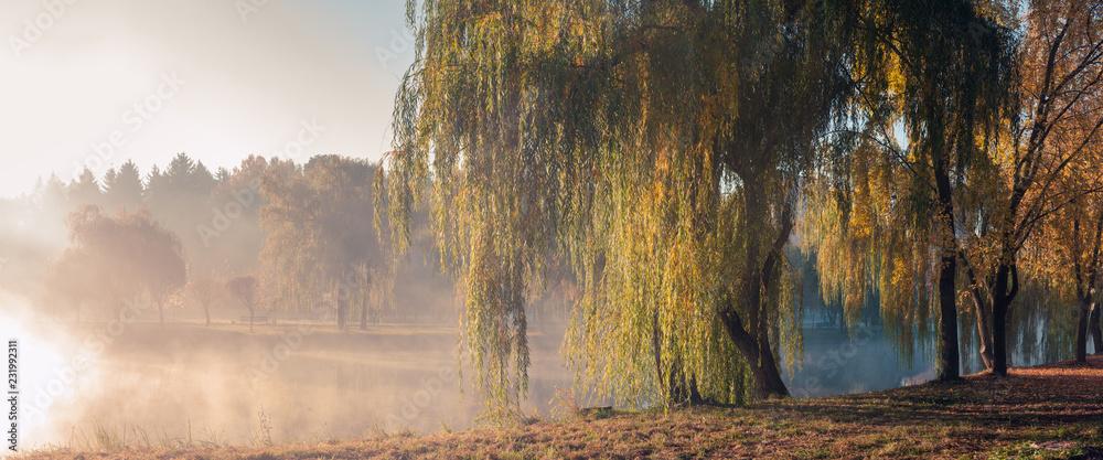 Fototapeta autumn foggy morning in the city park