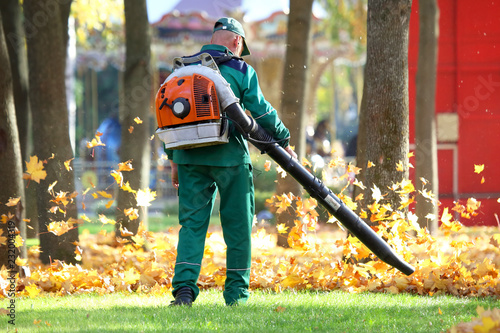 worker in the Park cleans the grass from fallen leaves with the help of a wind t Canvas Print