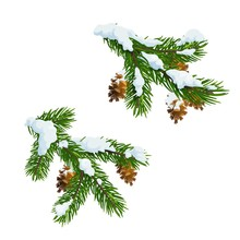 Christmas Pine And Fir Branches In Snow