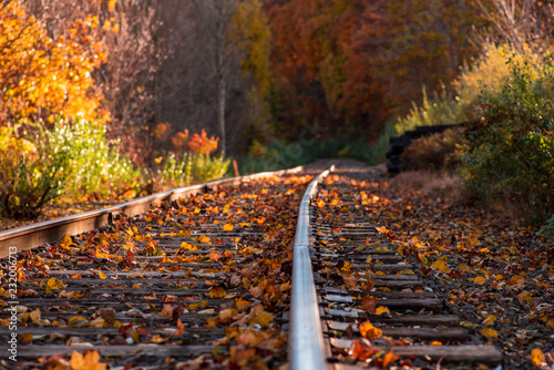Foto auf AluDibond Schokobraun Colorful autumn landscape Beautiful autumn forest train tracks