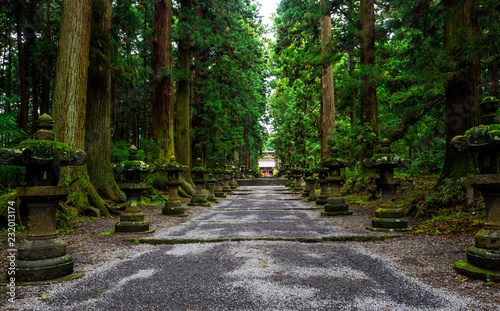 Fujiyoshida Sengen Shrine, a long approach lined by stone lanterns and tall cedar trees, Japan - Sep 2018
