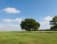 Trees Near The Horizon