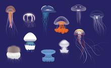 Various Species Jellyfish Cartoon Vector