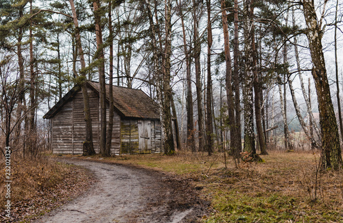 Fotografie, Obraz  Path leading to the wooden barn in the forest