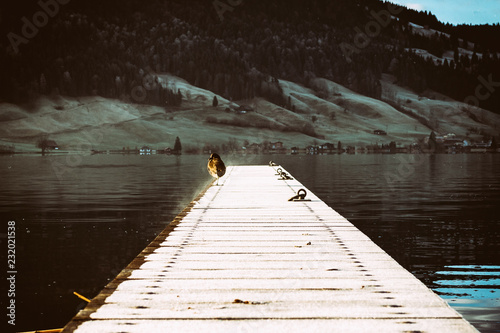 Fotografia  Lonely bird sitting on the lake pier, coast with houses in the background