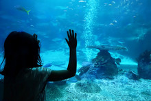 Silhouette Girl In Front Of An Aquarium
