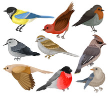 Set Of Winter Birds. Wildlife And Fauna Theme. Wild Feathered Animal. Flat Vector Elements For Ornithology Book