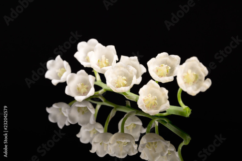 Wall Murals Lily of the valley Single twig of spring flowers of Lily of the valley isolated on black background