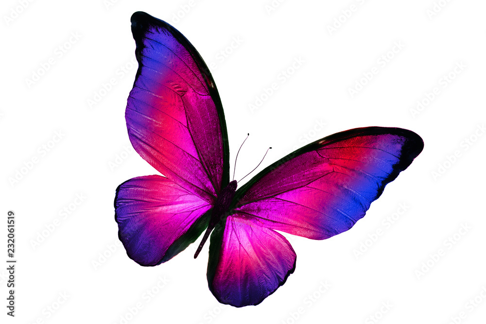 Fototapeta beautiful multicolor butterfly isolated on white background