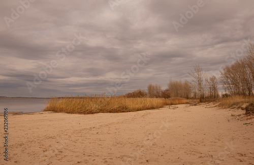 Fototapeta Reed and river in the fall obraz na płótnie
