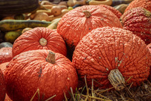 Red Warty Thing Squashes (Cucu...