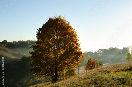 Autumn broadleaf maple Canvas Print