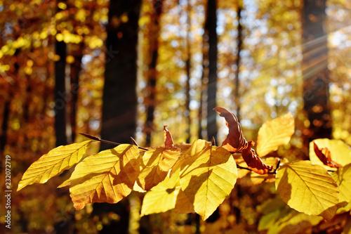 Herbstwald im Chiemgau - Bayern
