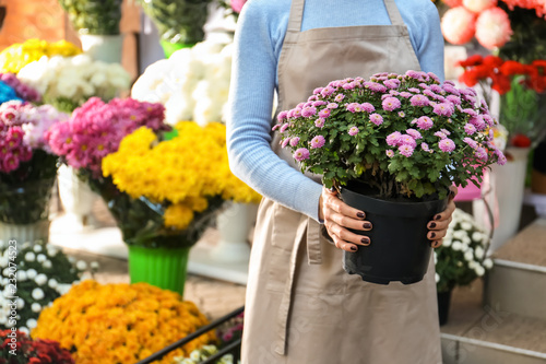 Fotomural Saleswoman holding pot with beautiful chrysanthemum flowers in shop