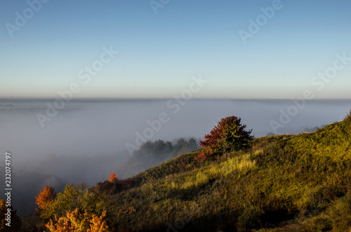 Dense fog over the forest Canvas Print