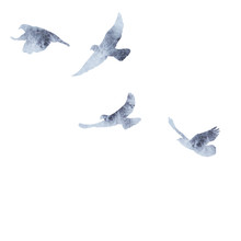 Flock Of Birds Flying, Gray Watercolor Silhouette