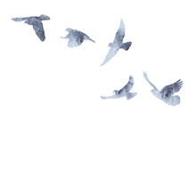 Isolated Flock Of Birds Flying...