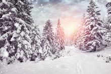 Winterurlaub - Schnee Im Wald