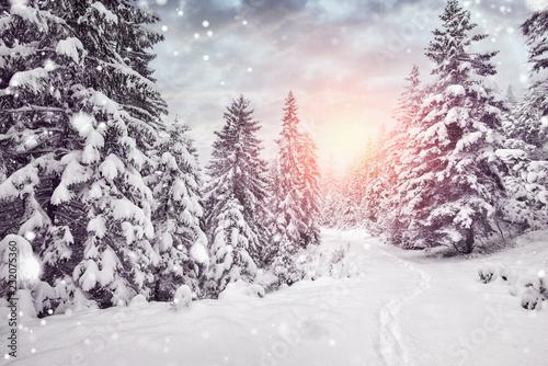 Fotografía  winterurlaub - schnee im wald