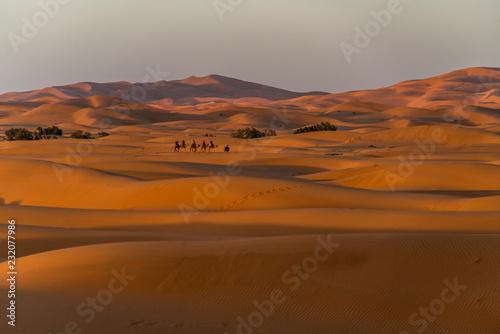 Photo  Kamel Karawane in der Wüste Sahara  bei Merzouga, Marokko    Camel caravan in th