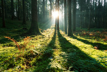 Magic Morning Sunlight In Mossy Forest Landscape.