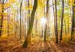 Buchenwald im Herbst mit Sonnenschein